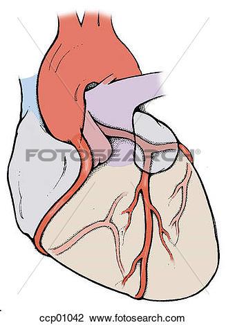 Clip Art of Coronary arteries and aorta ccp01042.