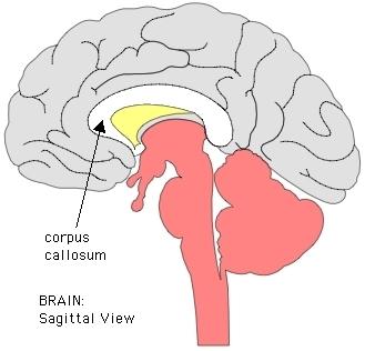 neurophysiology.