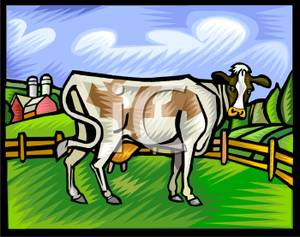 Cow Standing on a Farm In the Corral.