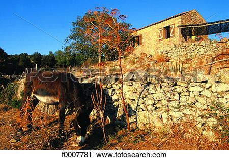 Stock Photography of France, Corsica, Sagone, donkey and Corsican.