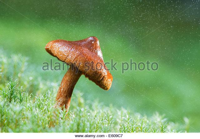 Magic Mushrooms Stock Photos & Magic Mushrooms Stock Images.