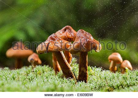 Fungal Stock Photos & Fungal Stock Images.