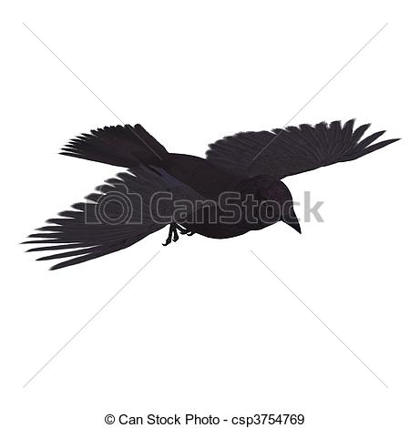 Corvidae Clipart and Stock Illustrations. 55 Corvidae vector EPS.
