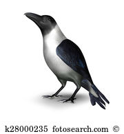 Corvidae Illustrations and Clip Art. 18 corvidae royalty free.