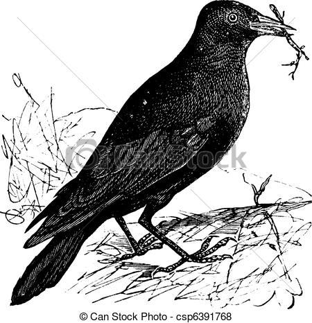 Corvus Clipart and Stock Illustrations. 209 Corvus vector EPS.