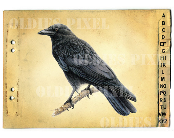 Corvus Corone Carrion Crow Bird Drawing Instant by OldiesPixel.