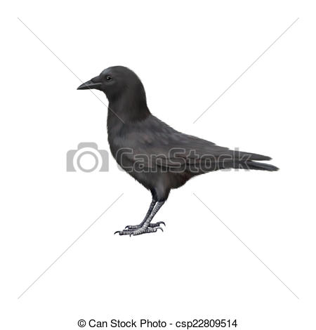 Clipart of Side view of a Carrion Crow, Corvus corone, isolated on.
