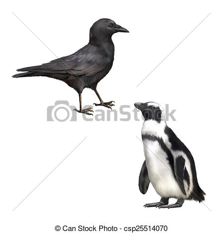 Picture of Side view of a Carrion Crow, Corvus corone, gentoo.