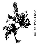 Corydalis Clipart and Stock Illustrations. 5 Corydalis vector EPS.