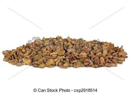 Stock Photo of Corydalis Tuber.