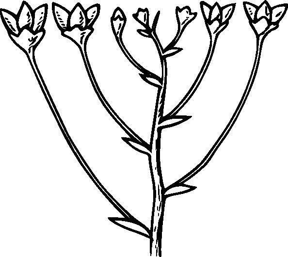 Corymb clip art Free Vector / 4Vector.