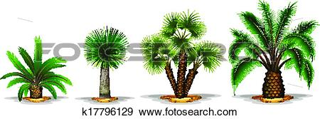 Clip Art of Palm plants k17796129.