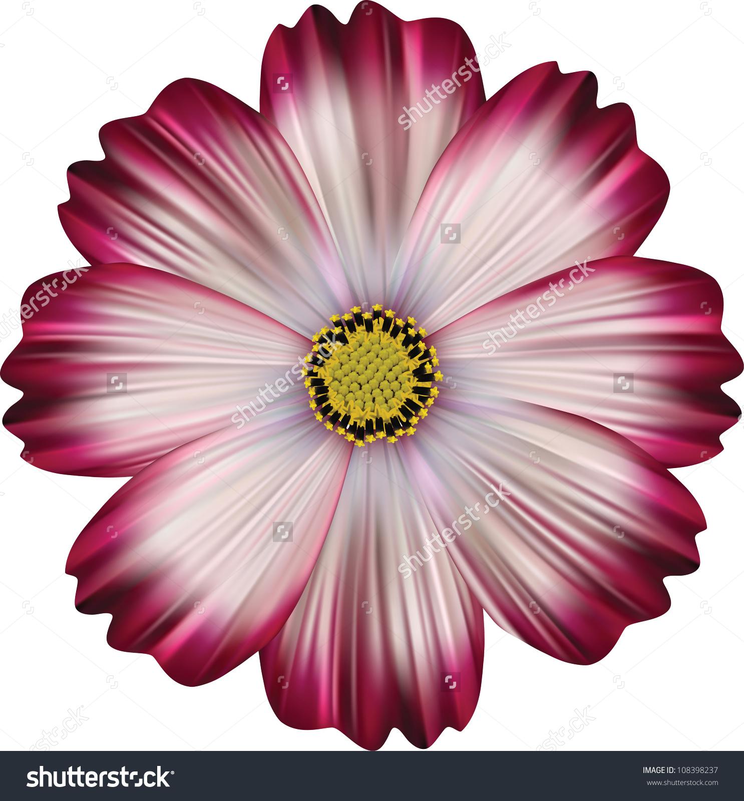 Pink Cosmea Rose Beautiful Cosmos Flower Stock Vector 108398237.
