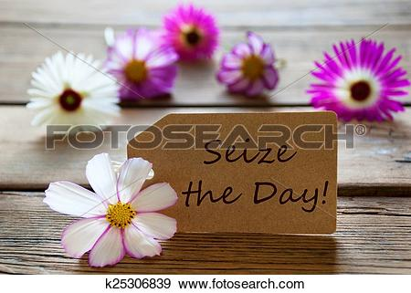 Stock Photograph of Sunny Label With German Life Quote With Cosmea.