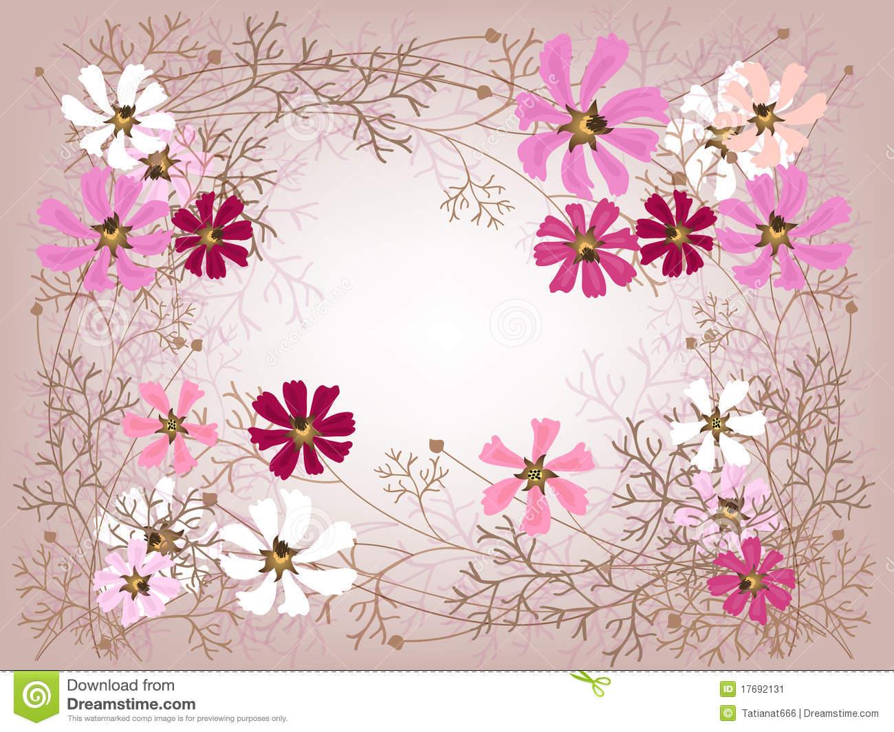 Cosmea Frame Stock Image.