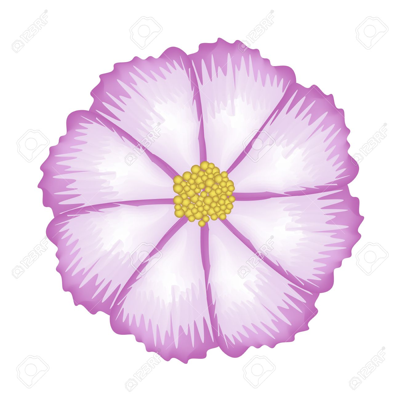 Symbol Of Love, Illustration Of Bright And Beautiful Fuchsia.