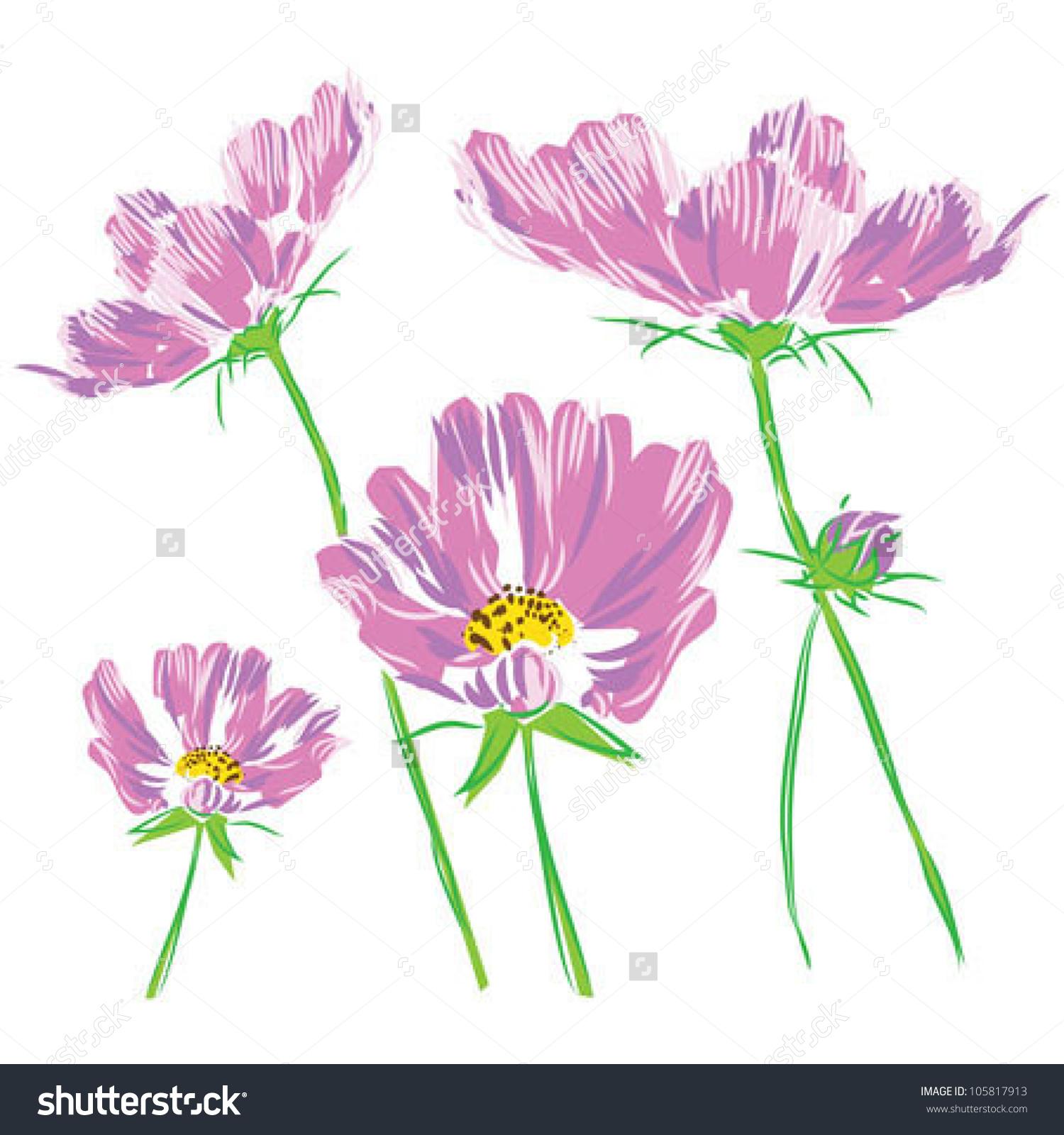 Vector Bouquet Flower Cosmos Bipinnatus.