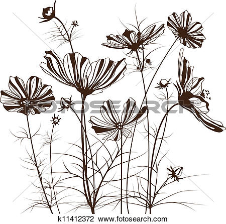 Clip Art of Vector garden flowers, Cosmos bipinnatus k11412372.