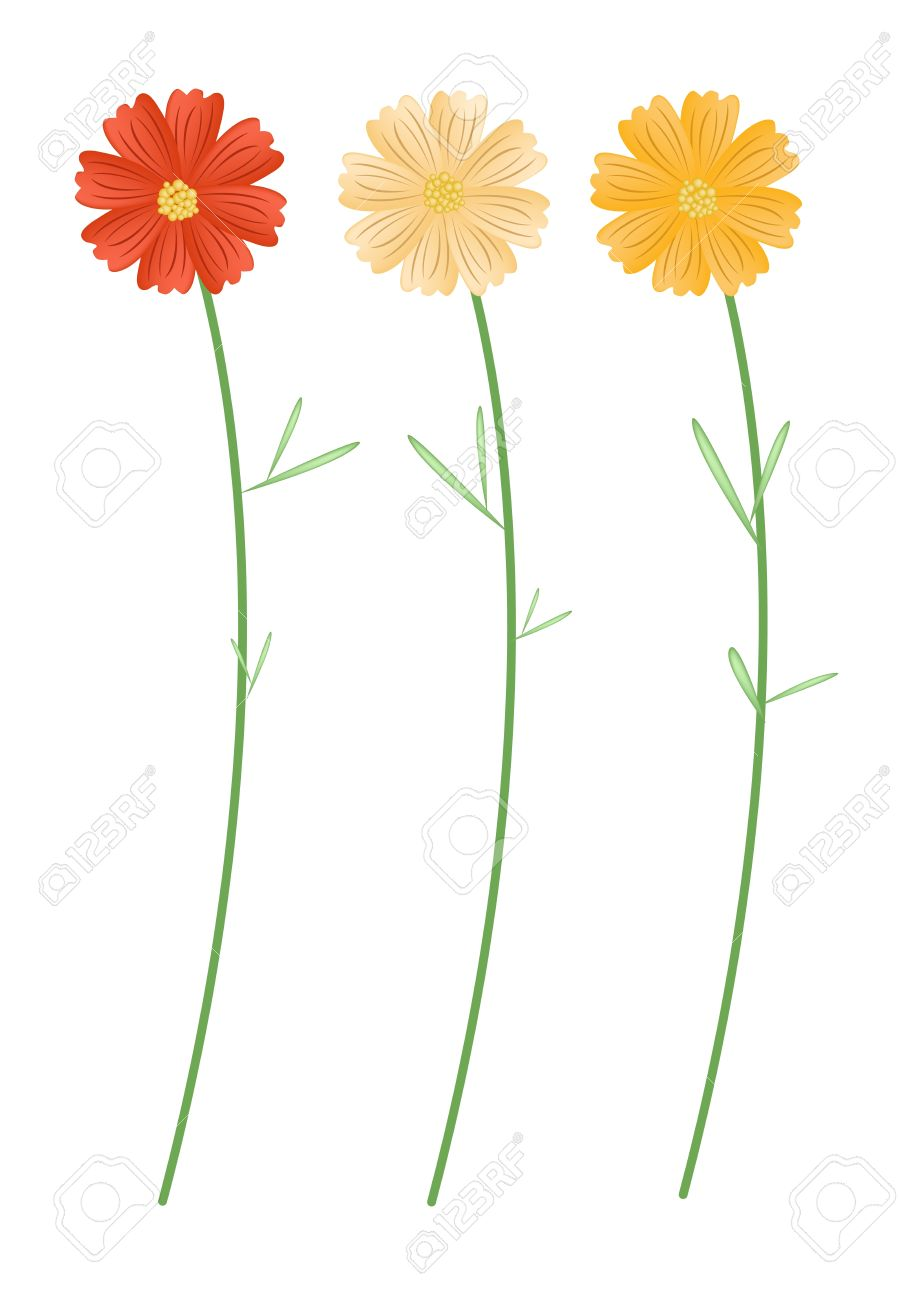 Symbol Of Love, Bright And Beautiful Yellowe And Orange Cosmos.