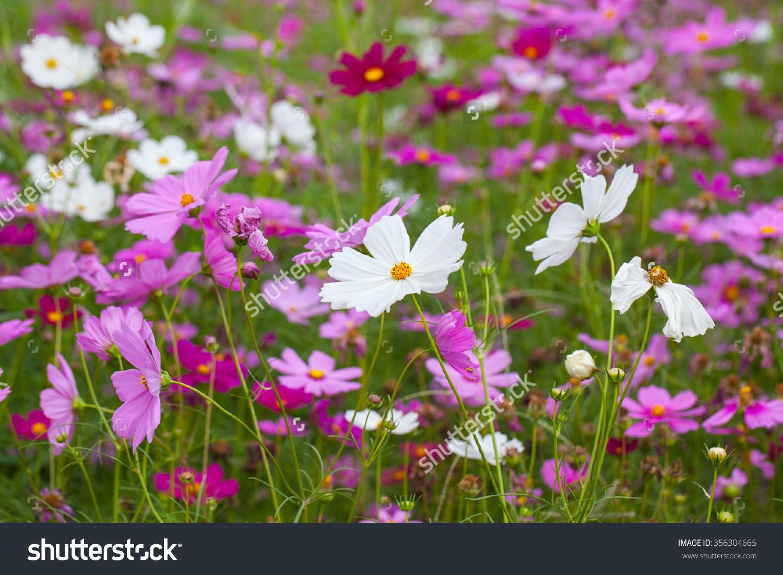 Stock Photo : Shutterstock.