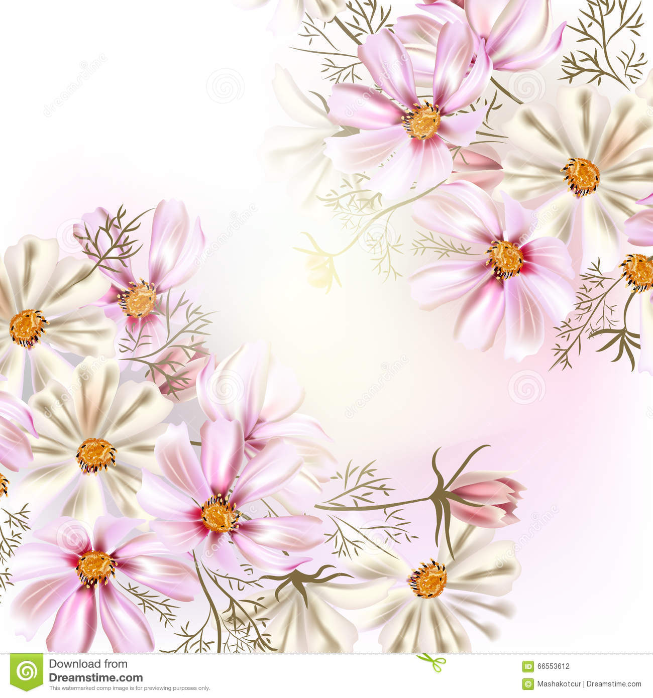 Beautiful Vector Illustration With Field Cosmos Flowers Stock.