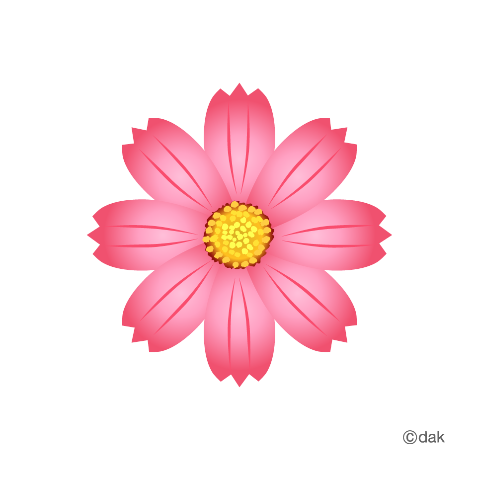 Cosmos Flower|Pictures of clipart and graphic design and.