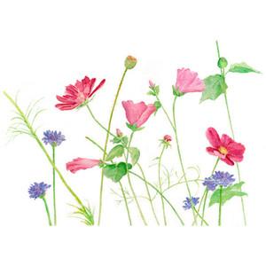 floral fillers.