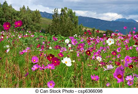 Pictures of wild flower meadow.