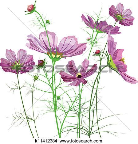 Clipart of Vector garden flowers, Cosmos k11412384.