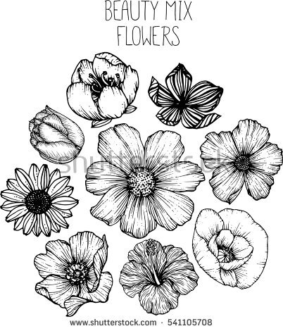 Cosmos Flowers Drawings Vector Stock Vector 421970998.
