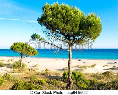 Stock Photo of Lonely pine trees on the beach of Bolonia, Tarifa.