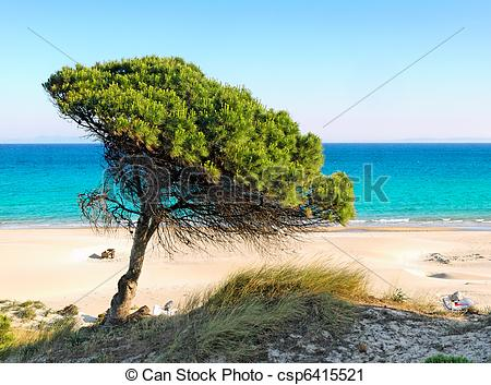 Stock Photography of lonely pine tree at the beach of Bolonia.