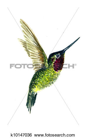 Stock Illustration of Costa's Hummingbird k10147036.