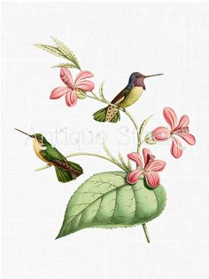 Hummingbird illustration, Hummingbirds and Stock illustrations on.