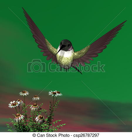 Stock Illustration of Costa's hummingbird.