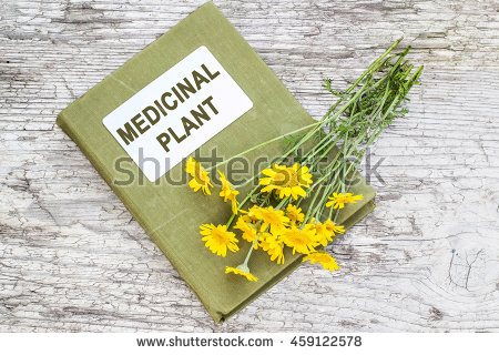 Anthemis Stock Photos, Royalty.