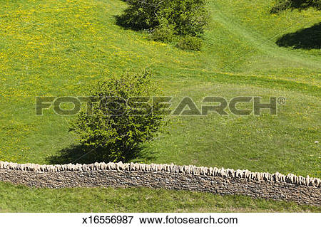 Picture of A Cotswold dry stone wall on Broadway Hill, UK.