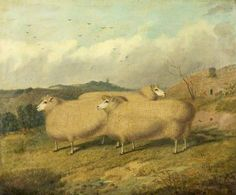 Cotswold Sheep Painting.
