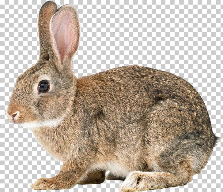 Easter Bunny Hare Cottontail rabbit Domestic rabbit European.
