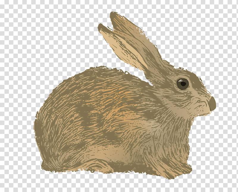 Mountain, Rabbit, Hare, New England Cottontail, Web Design.