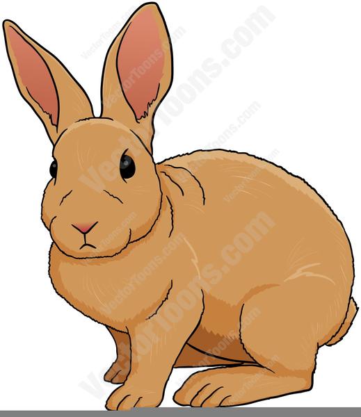 Cottontail Rabbit Clipart.