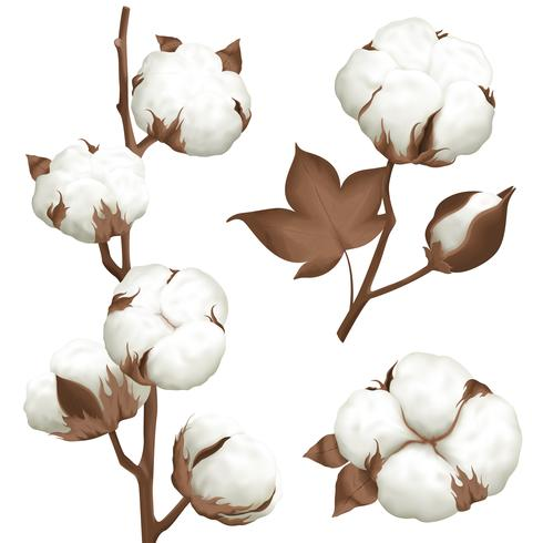Cotton Plant Boll Realistic Set.