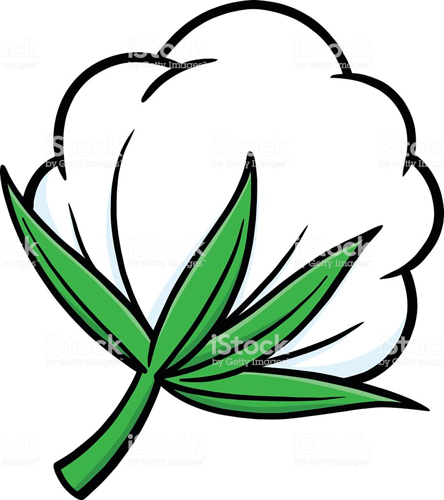 Cotton Clipart Free.