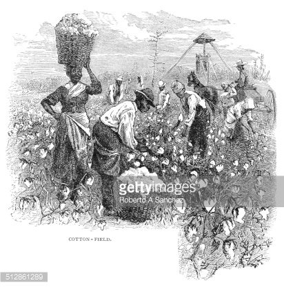 Cotton Fields engraving Clipart Image.