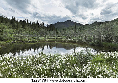Stock Photo of Small pond surrounded by cotton grass near Igloo.