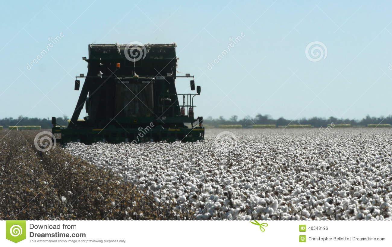 Cotton Harvest Stock Footage.