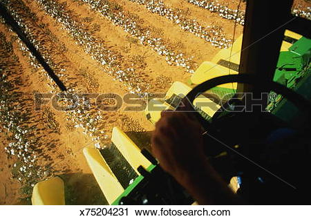 Stock Photography of Combine harvester gathering cotton, view from.