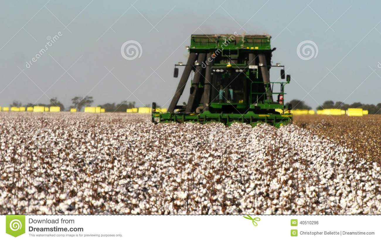 Cotton Harvester Stock Footage.