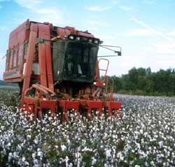 Cotton: From Field to Fabric.