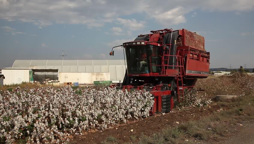 Cotton Flower Stock Footage Video.